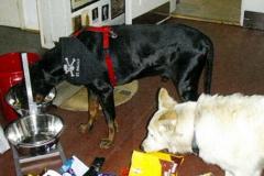 Hunde-08